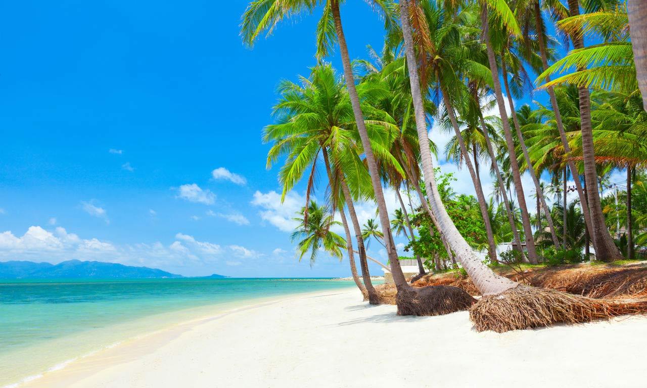 00117 asien luxusurlaub thailand koh samui traumstrand traumurlaub palmen