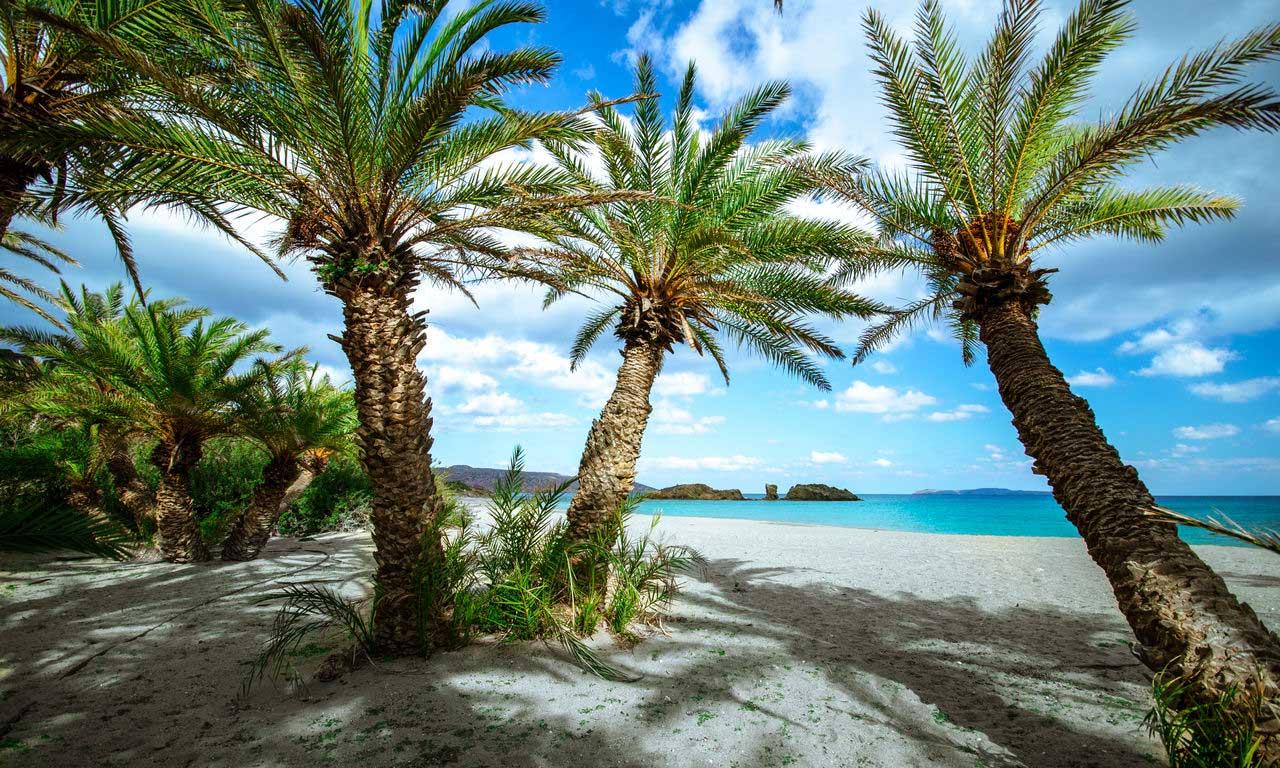 00437 kreta urlaub griechenland vai sandstrand mittelmeer palmen hotel