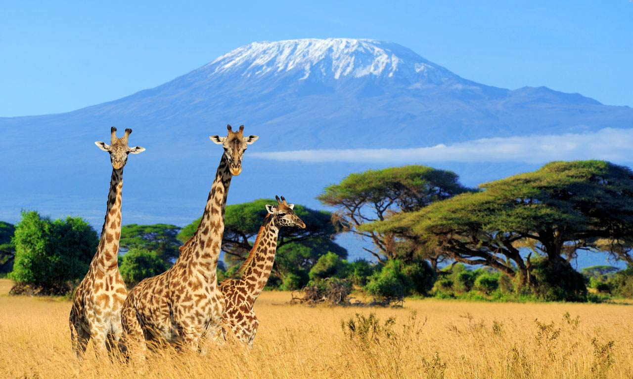 00979 Safari Urlaub in Kenia Giraffe Afrika Exotischer Urlaub