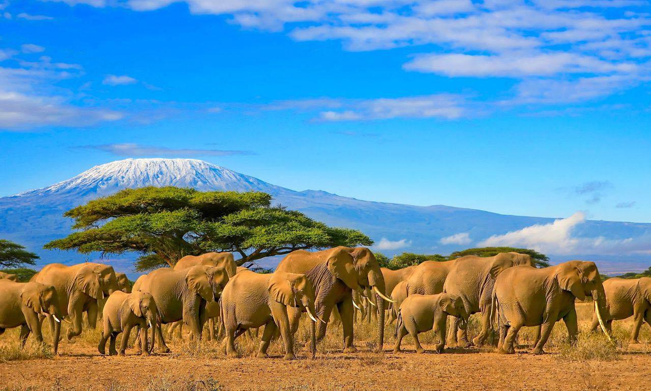 00980 kenia urlaub safari elefanten herde afrika exotischer urlaub