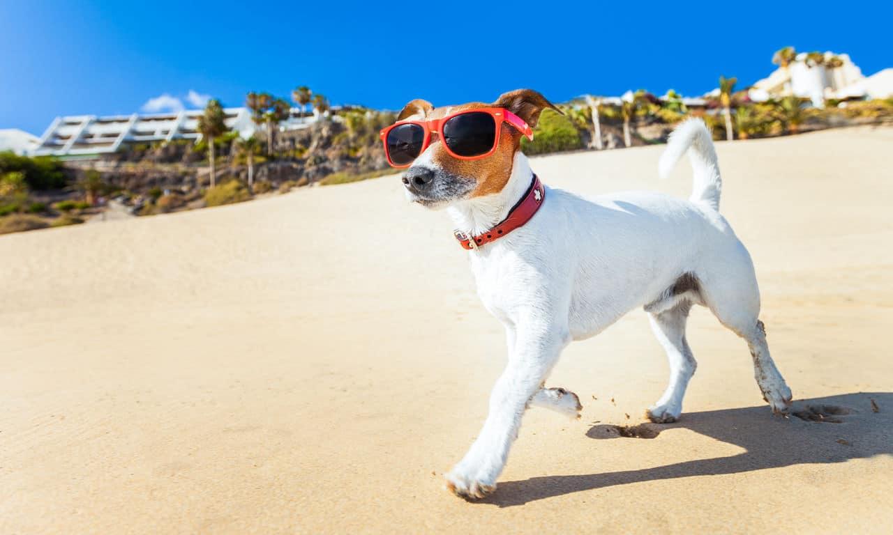 01064 Strandurlaub Meer Spaß Fun Sommer Urlaub 2019 günstig