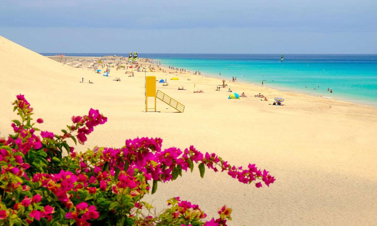01241 fuerteventura urlaub spanien atlantik kanaren insel sommer playa de matorral moro jable strandurlaub erholung palmen
