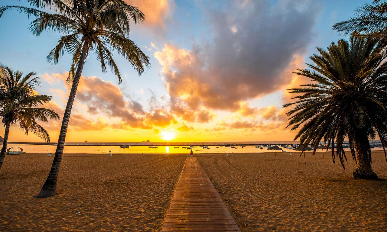 01306 teneriffa spanien urlaub atlantik kanaren insel sommer strandurlaub erholung palmen