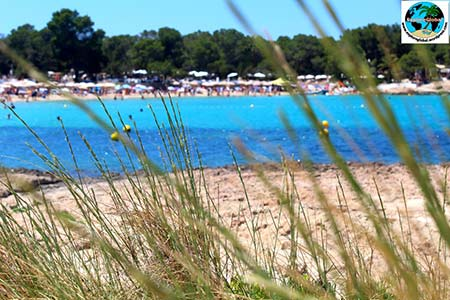 ibiza cala beach club bassa strand meer bucht 450