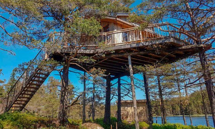 TreeTop Fiddan Ferienwohnung Norwegen Urlaub Im Baumhaus 3